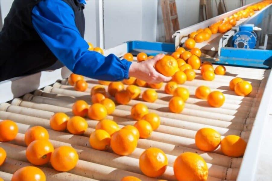 سورتینگ میوه و سبزیجات